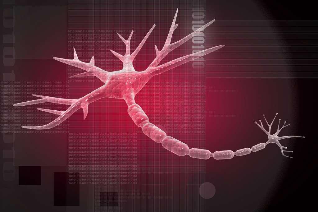 La gaine de myéline protège le neurone contre les courts-circuits. © jscreationzs, Fotolia