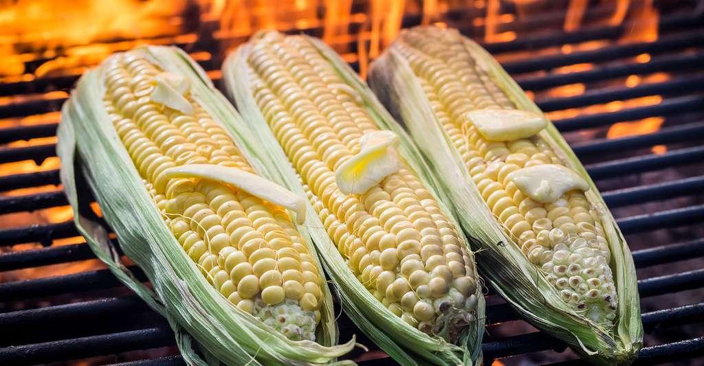 Épis de maïs cuits au barbecue. © Shaiith, Fotolia