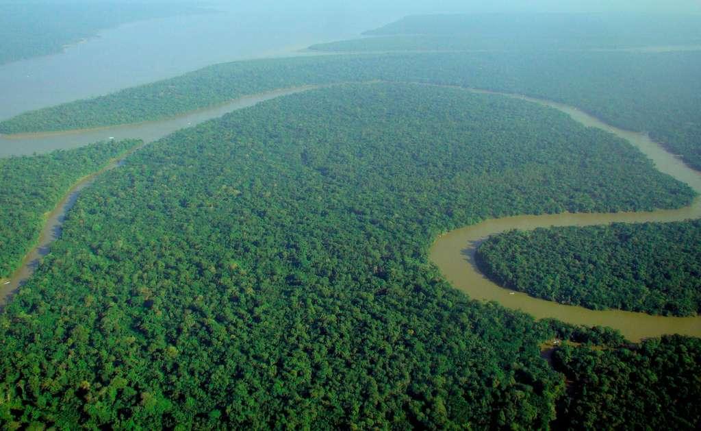 Le carbone stocké dans les écosystèmes terrestres, comme les forêts tropicales (ici, la forêt amazonienne), réduit d'autant son accumulation dans l'atmosphère sous forme de dioxyde de carbone, ce qui contribue au changement climatique. © Lubasi, licence CC BY-SA 2.0