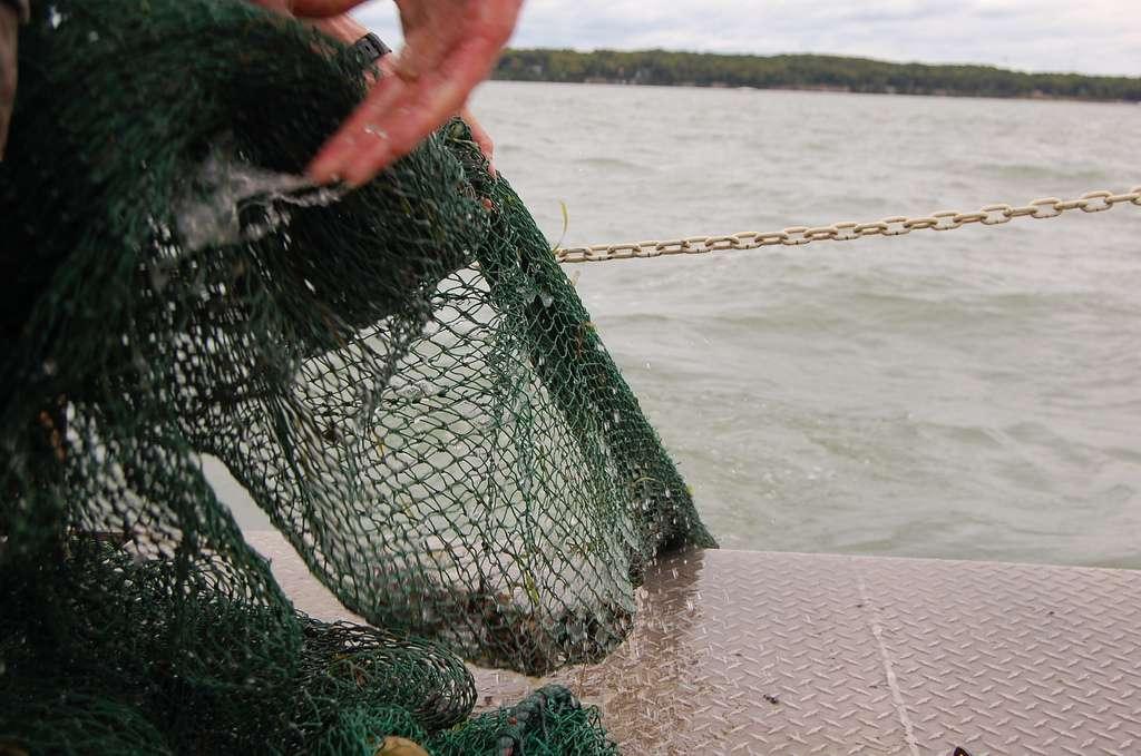 Les prises de pêche peuvent être sous-déclarées pour différentes raisons, par exemple quand elles ont été réalisées en dehors de tout cadre légal. Dans d'autres cas, déclarer moins de prises permet tout simplement de payer moins de redevances au pays d'accueil. © Ohio Sea Grant and Stone Laboratory, Flickr, cc by nc 2.0