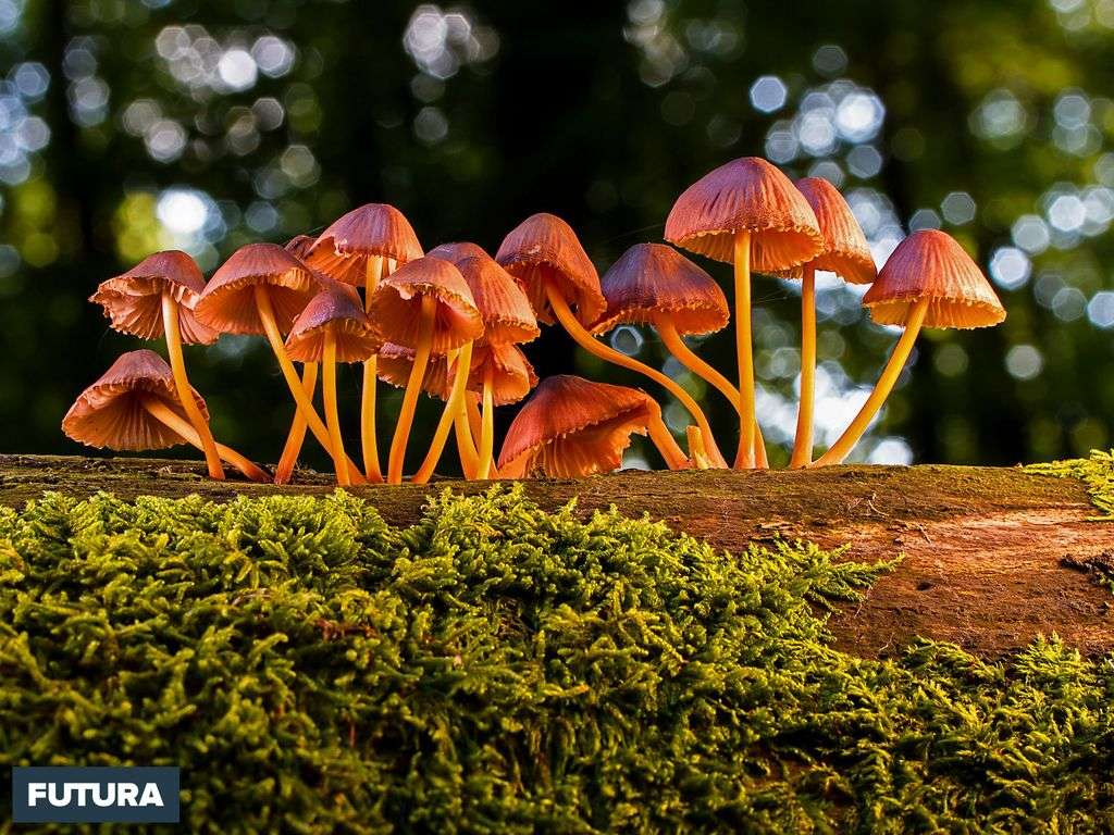 C'est la saison des champignons