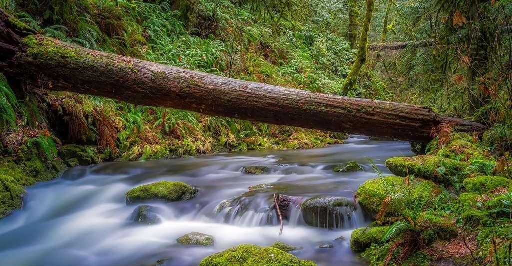 Paysage relaxant d'une forêt. © Tpsdave - Domaine public