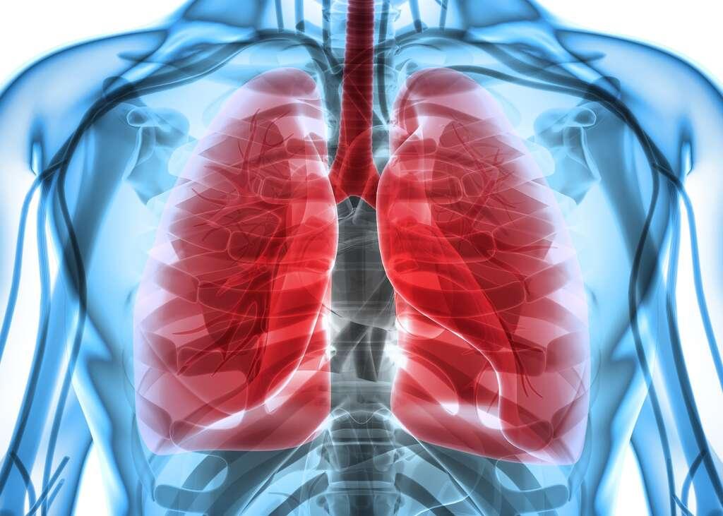 Les poumons d'un fumeur sont une région très inflammatoire et immunodéprimée.© yodiyim, Fotolia