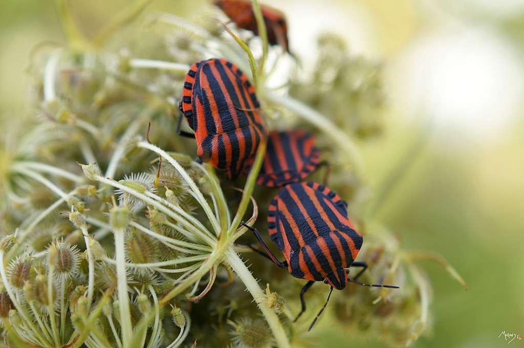 Les insectes ne sont pas tous comestibles et leurs qualités gustatives seraient très inégales... © laurentmaurand, Flickr, cc by nc nd 2.0