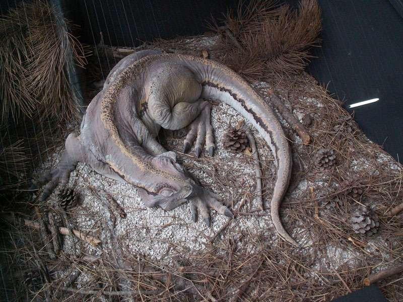 Psittacosaurus, le dinosaure-perroquet