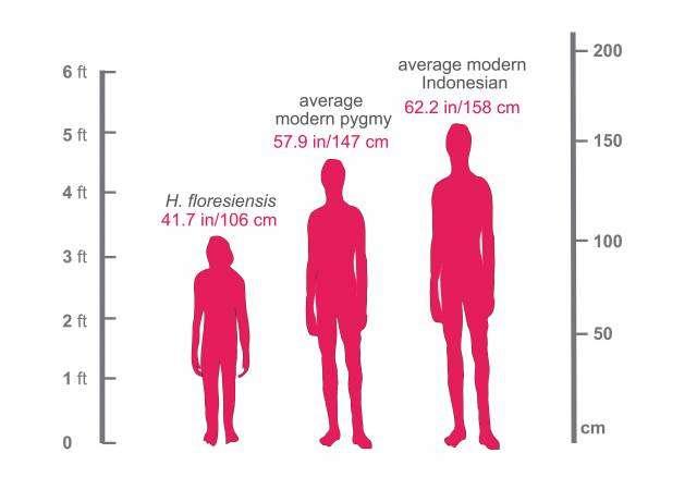 À gauche, le hobbit ou Homme de Florès qui mesurait à peine plus que la taille d'un enfant de quatre ans. Au centre, le pygmée moderne vivant sur l'île de Florès. Et à droite, une comparaison avec un Indonésien moyen. © Serena Tucci, Department of Ecology and Evolutionary Biology, Princeton University
