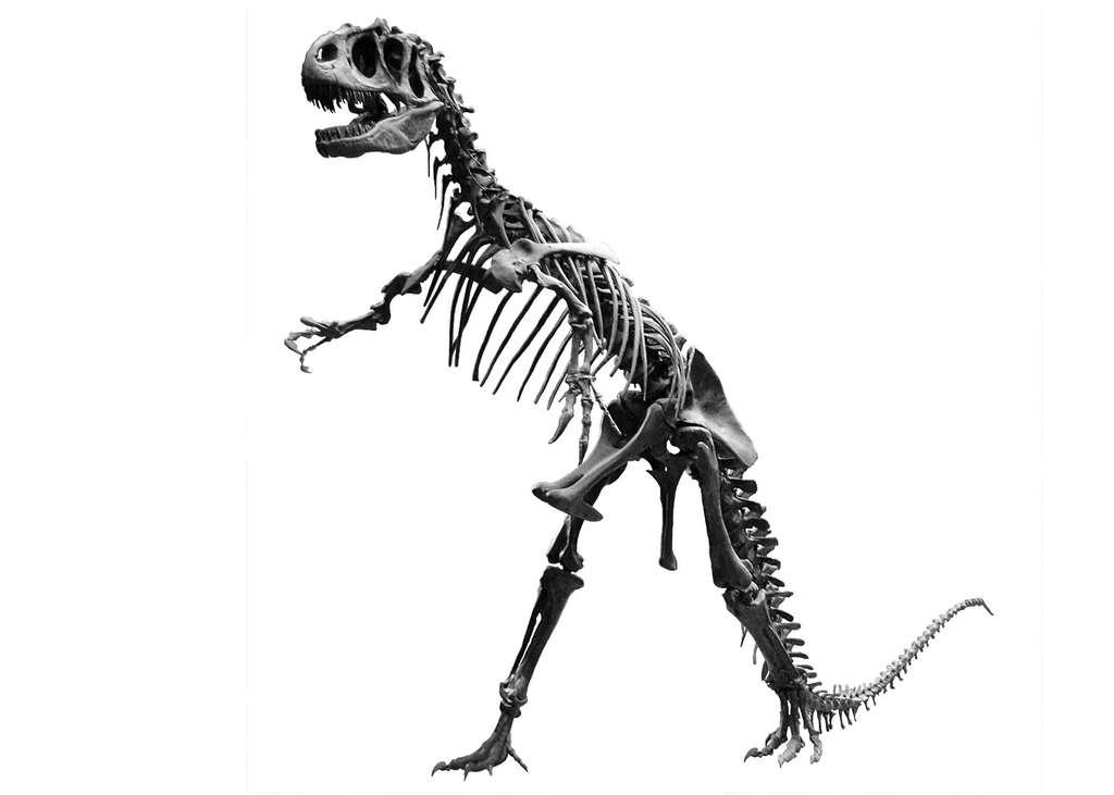 Squelette d'allosaure