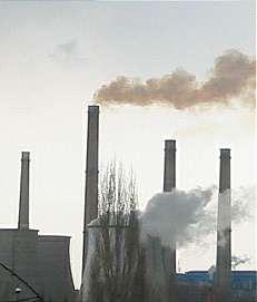 La pollution atmosphérique est en partie limitée par l'absorption des COV par les feuilles des arbres. © DR