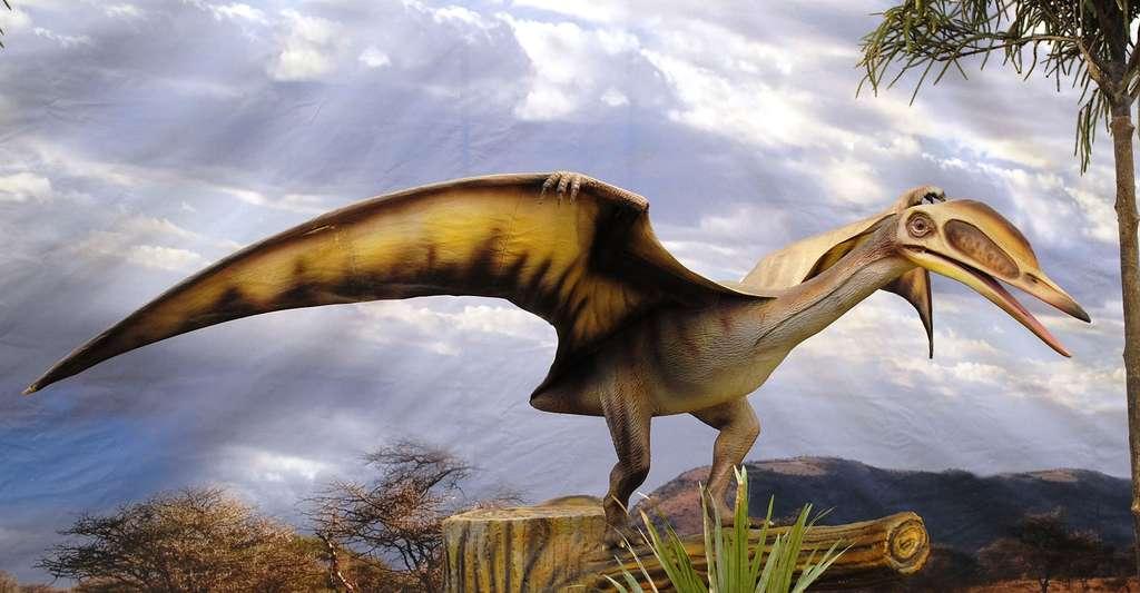 Pterosauria. © HombreDHojalata, Wikimedia commons, CC by-sa 3.0