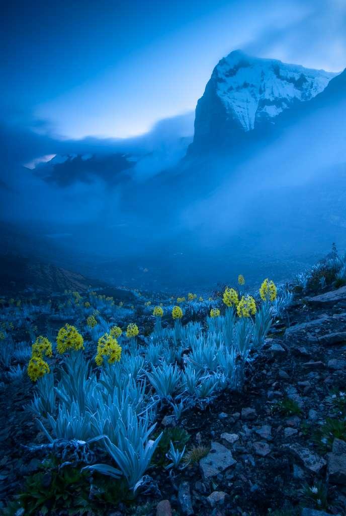 Ces plantes Senecio que l'on ne trouve qu'en Colombie sont adaptées aux froids extrêmes qui règnent dans les Andes. © Gabriel Eisenband, Wildlife Photographer of the Year 2020