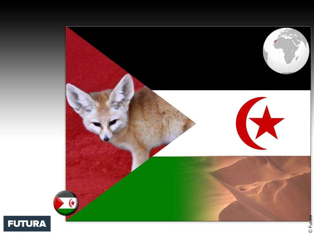 Drapeau : Sahara occidental