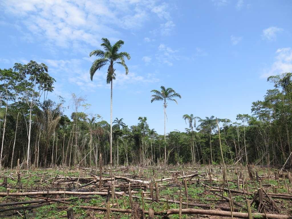 Autre responsable des pertes record des surfaces boisées en 2016 : la déforestation. © TravelStrategy, fotolia