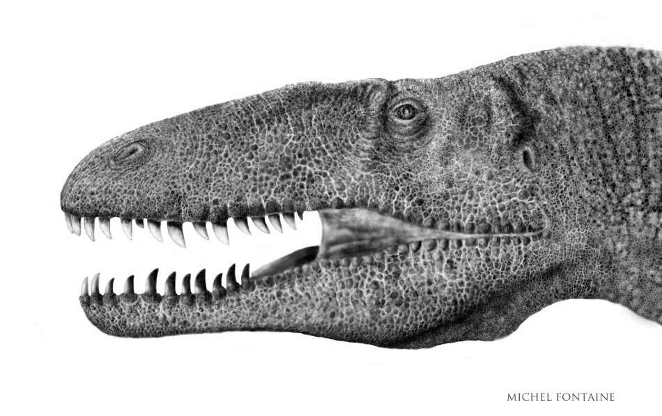 À l'aide du squelette complété, on reconstitue la peau et tous les détails. © Michel Fontaine
