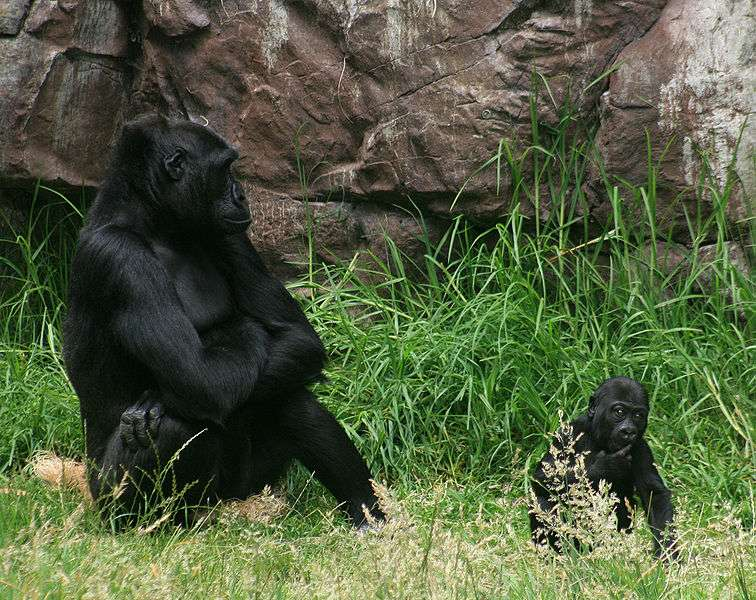 Femelle et son jeune au zoo de SF, États-Unis. © Mila Zinkova, CC by S1 3.0