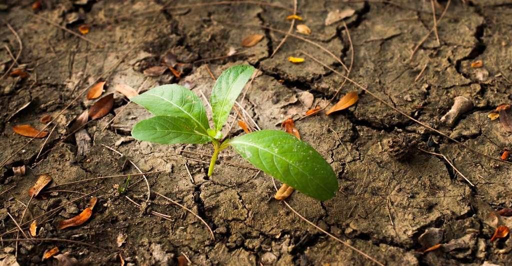 En 2050, quatre milliards de personnes pourraient vivre en zone aride. Cette dégradation des sols pourrait pousser plusieurs centaines de millions de ces personnes à migrer vers des régions plus accueillantes. Quant à celles qui resteront sur place, elles seront exposées à des risques accrus de conflits violents. © Natthawee Suwannatthachot, Shutterstock