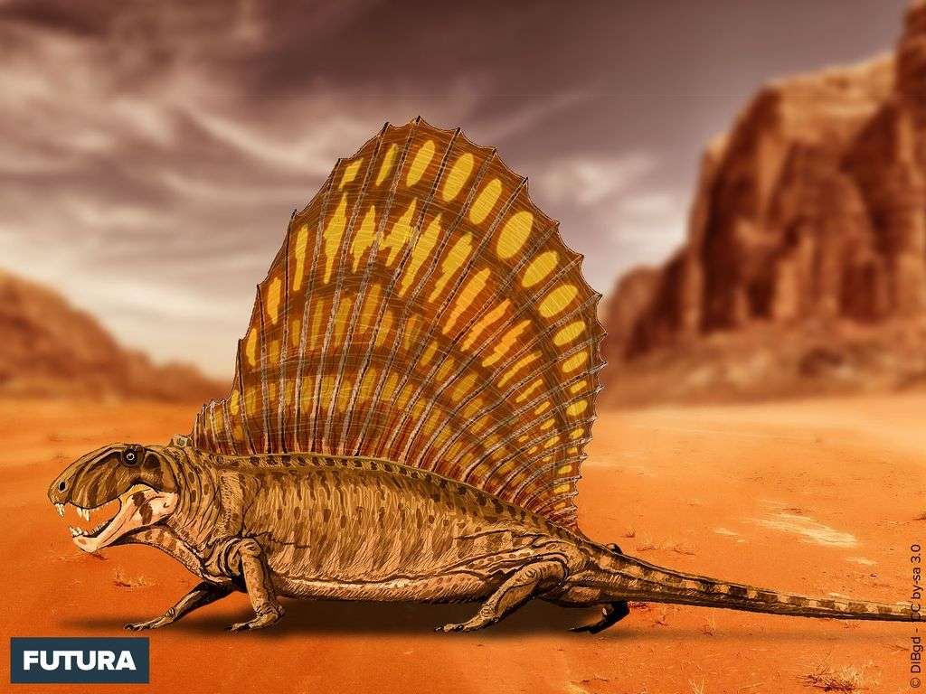 Le Dimetrodon grandis a vécu durant le Permien, entre 280 et 265 Ma avant notre ère.