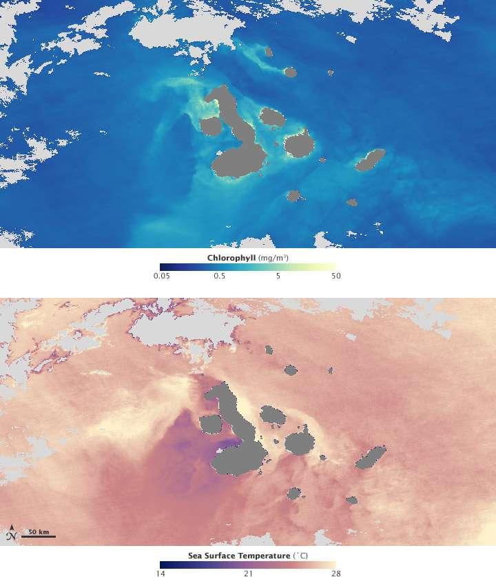 Ces images en fausses couleurs offrent un aperçu de la concentration de phytoplancton le long des côtes de l'archipel des Galápagos. © Nasa Earth Observatory