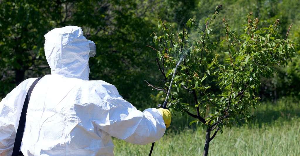 Les pollinisateurs sont menacés par les pesticides. Ici, pulvérisation de pesticides. © Wellphoto, Shutterstock