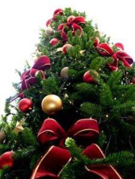 Le sapin de Noël reste la star des fêtes de fin d'année. © Wikio
