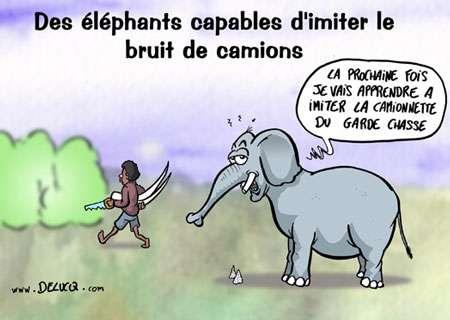 Les éléphants, rois de l'imitation