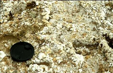 Efflorescence saline à la surface d'un sol salé