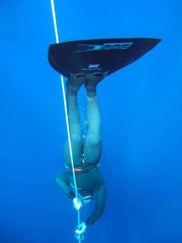 Après un plongeon, les mammifères marins ont la technique pour remonter en évitant un accident de décompression. Pas les humains... © Jayhem, Flickr, cc by 2.0