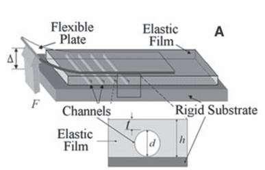 L'élastpomère est posé sur une surface dure. A l'intérieur, il recèle un réseau de canaux microscopiques emplis d'air ou d'huile. Grâce à eux, le film appliqué sur l'élastomère colle mieux. La grenouille et le criquet, paraît-il, le savent déjà… © A. Majumder, A. Ghatak, A. Sharma