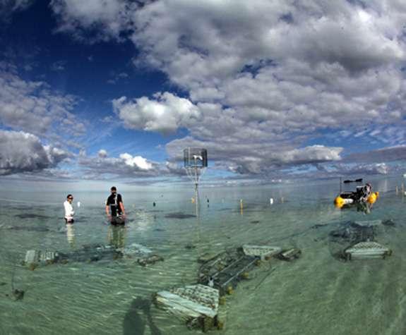 Le chercheur Davey Kline, du Scripps, a travaillé avec une équipe internationale pour tester l'impact de l'acidification des océans sur les récifs coralliens. Ils ont mis en place une structure qui s'approche le plus possible d'un récif corallien naturel. © Scripps