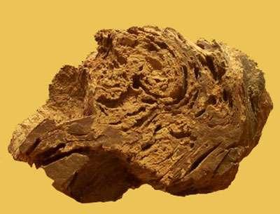 Les stromatolites sont des cyanobactéries produisant du calcaire. À l'image : des stromatolites du Sahara ont formé autour d'elles cette masse. © DR