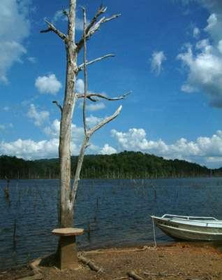 La déforestation est encore faible en Guyane française, gràce à la vigilance et au « bon sens » de l'ONF et des autorités. Le lac artificiel de Petit-Saut, créé à l'occasion de la mise en eau du barrage, a recouvert quelques 360 km2 de forêts. Ce nouvel écosystème lacustro-forestier est étudié depuis quelques années par les hydrobiologistes locaux. © François Catzeflis