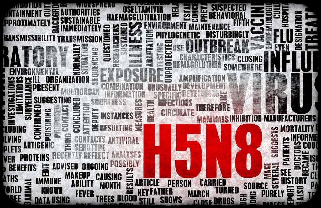 C'est le centre russe de virologie et de biotechnologie de l'État de Vektor qui a détecté la transmission du virus H5N8 à l'Homme. Après avoir développé l'un des vaccins contre le coronavirus SARS-CoV-2, il se dit prêt à travailler sur des kits de test pour identifier les cas potentiels de H5N8 chez l'Homme et envisage d'ores et déjà la mise au point d'un vaccin. © Yay Images, Adobe Stock