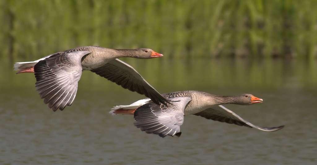 Les oiseaux ont-ils réellement concurrencé les mammifères après la disparition des dinosaures ? © 258817g, DP