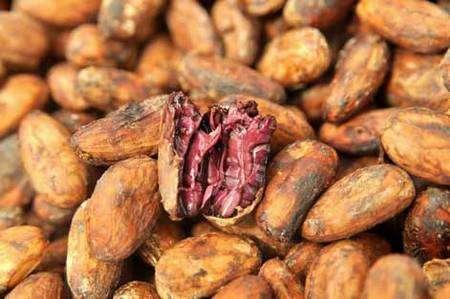 Grâce à ses investissements, la Conacado peut exporter du cacao séché de qualité supérieure. © Max Haavelar