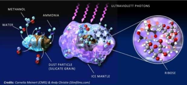 Le ribose, un sucre à cinq atomes de carbone, se forme dans le manteau de glace des grains de poussière, à partir de molécules précurseures simples (eau, méthanol et ammoniac) et sous l'effet de radiations intenses. © Cornelia Meinert (CNRS), Andy Christie (Slimfilms.com)
