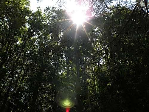 Forêt alpestre. © Mypouss, Flickr, Creative Commons