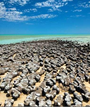 Vue d'une portion du littoral ouest de l'Australie dans le parc national de Yalgorup où apparaissent à marée basse de nombreux stromatolithes similaires à ceux formés sur Terre voici plus de 3,5 milliards d'années. Mais on ne peut pas encore dater formellement l'apparition de la vie sur Terre. © Dunod 2011