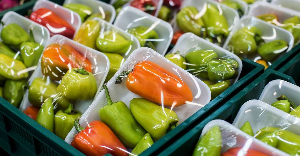 Poivrons verts et oranges dans des emballages alimentaires. © Goncharov Artem - Shutterstock