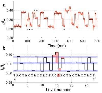 La variation d'intensité en fonction du passage de chaque nucléotide (A, C, T, G) dans le pore est ici nettement visible. Il est donc possible de déterminer assez facilement leur position sur la molécule d'ADN. © University of Washington