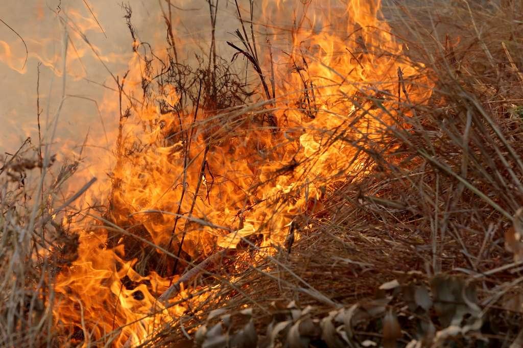 Herbes sèches, chaleur… Des conditions propices aux feux. © meepoohyaphoto, Fotolia