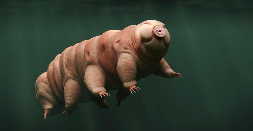 Au bout des doigts des «cochons moisis», pas de griffes comme c'est le cas pour les tardigrades, ici en photo, ou les acariens. © dottedyeti, Fotolia