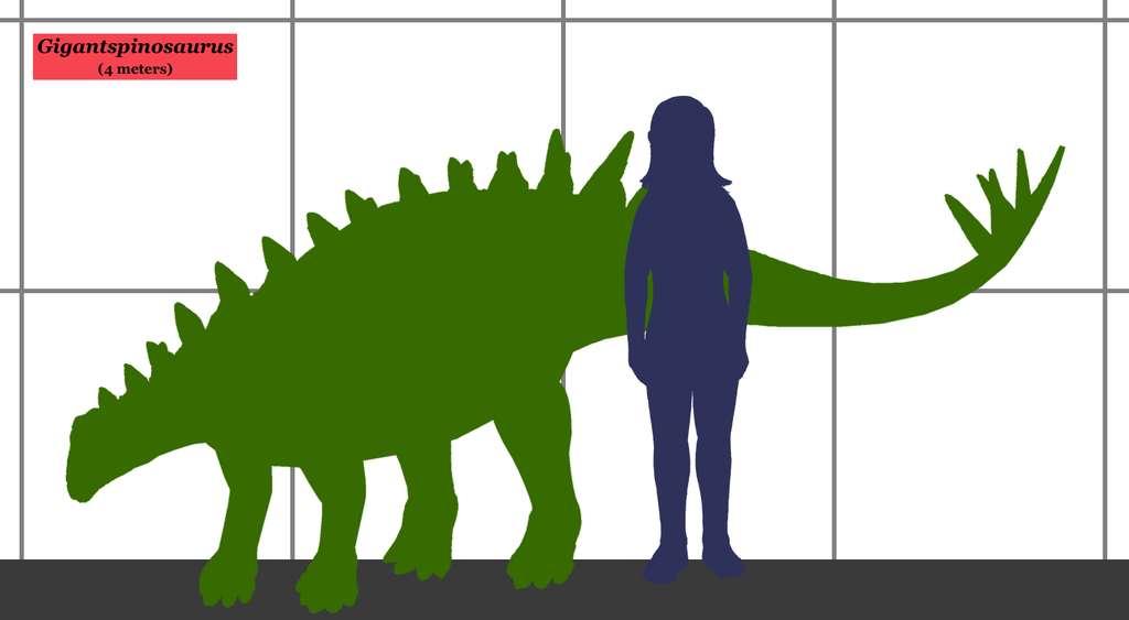 Taille du Gigantspinosaurus ou Gigantspinosaure