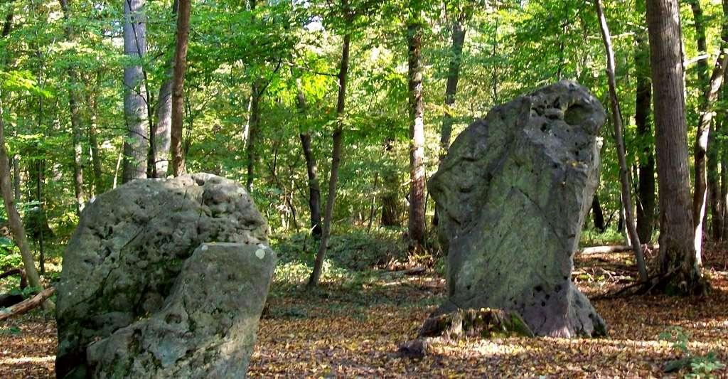 """Les menhirs dits """"des Indrolles"""" dans la forêt domaniale d'Halatte. © P.Poschade, Wikimedia commons, CC 2.0 France."""