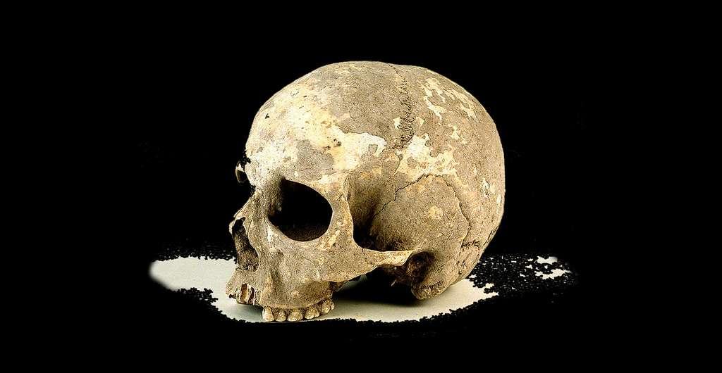 Ossements d'un crâne. © Musée d'Altameria, Wikimedia commons, CC 3.0