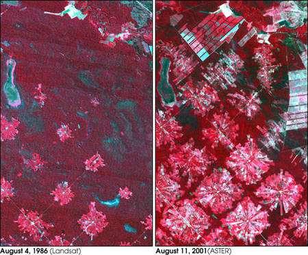 Images satellites en infrarouge montrant la déforestation en Bolivie entre 1986 et 2001. La forêt intacte apparaît en rouge foncé, tandis que le déboisement, qui progresse à partir du centre de chaque zone, laisse une trace claire ou blanche où le terrain est entièrement défriché. Crédit Nasa/GSFC/MITI/ERSDAC/Jaros, U.S./Japan ASTER Science Team