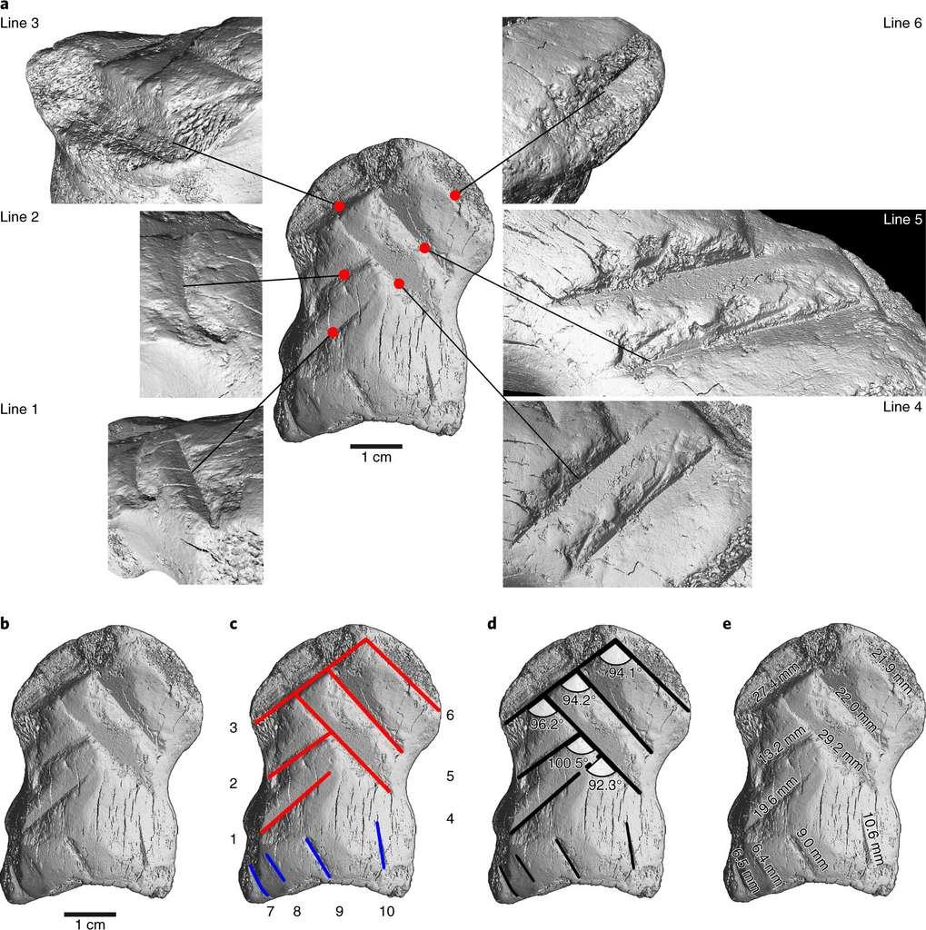 La microtomographie à rayons X permet d'examiner en détail les lignes gravées sur la phalange de mégacéros. © Leder et al., 2021