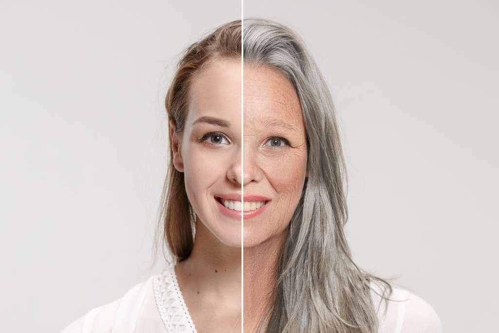 Le microbiote intestinal serait impliqué dans le processus de vieillissement. © master1305, Adobe Stock