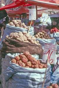 Pommes de terre Bolivie © Christian Lévêque