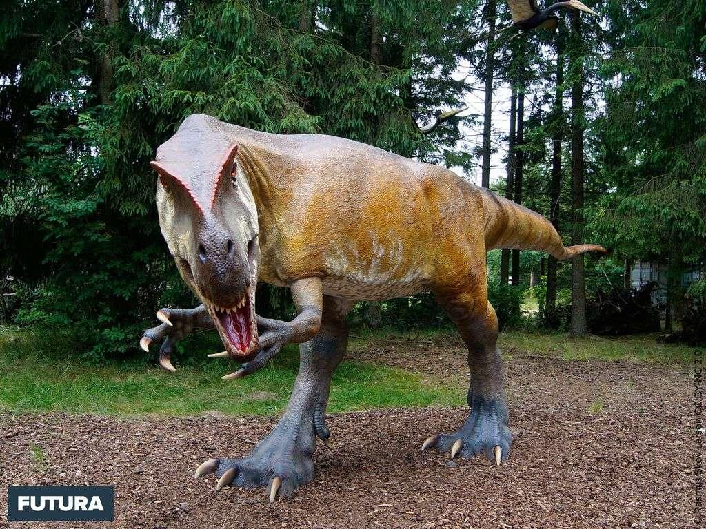 Ceratosaurus carnivore bipède d'Amérique du Nord vivant au Jurassique supérieur