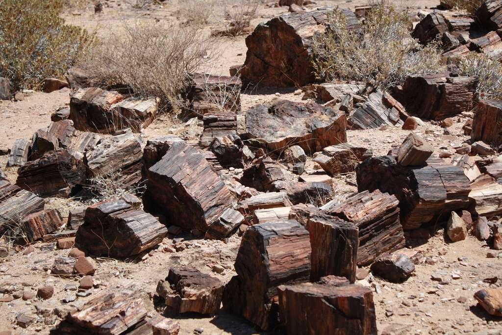 Les troncs de la forêt pétrifiée datent d'environ 200 millions d'années. © Jean & Nathalie, Flickr CC by 2.0