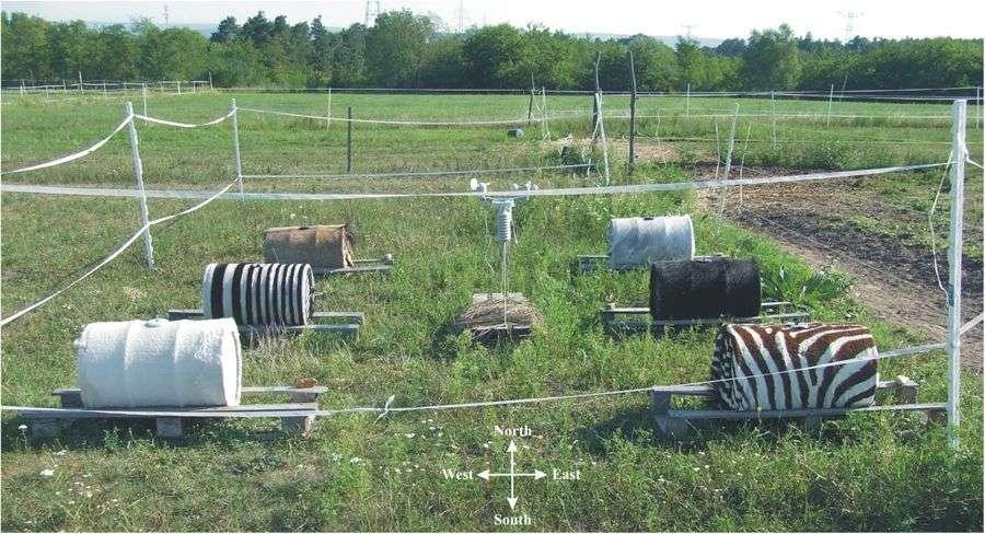 Ici, l'arrangement des six barils de la station météorologique utilisés par les chercheurs hongrois dans leurs expériences. © Gábor Horváth, ELTE Eötvös Loránd University